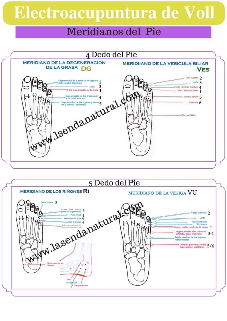 Electroacupuntura-de-Voll-dedos-del-pie-2