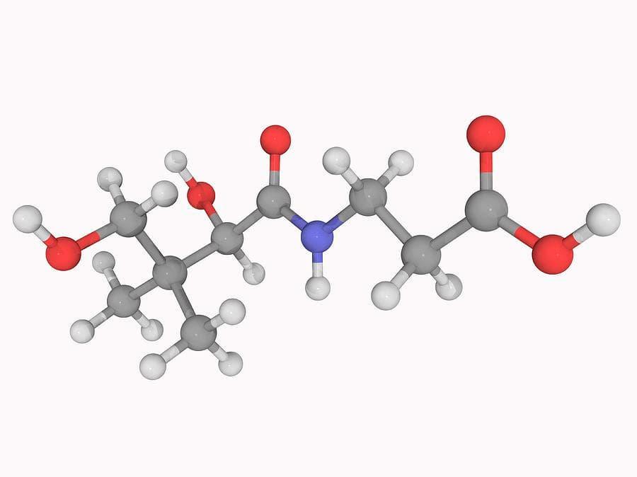 Acido pantoténico B5