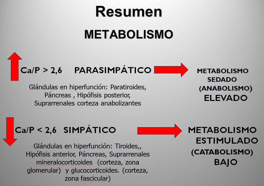cabello-y-metabolismo