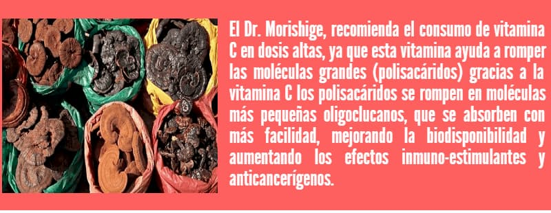 ganoderma lucidum