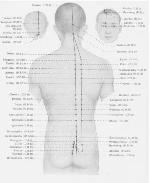 meridiano de la vejiga posterior