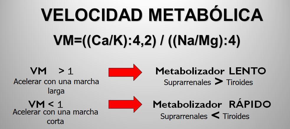 velocidad-metabolica